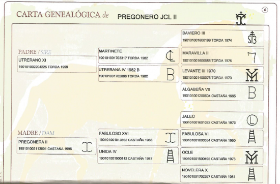 carte genealogique pregonero