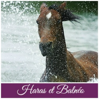 photo site haras et balnéo fin