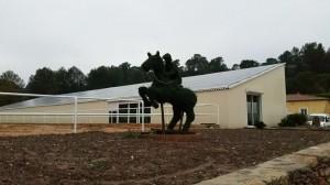 Notre cavalier en ligustum delavayanum